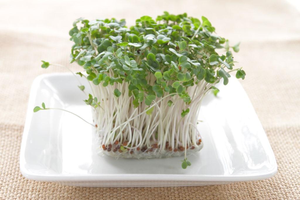 graines germées alimentation