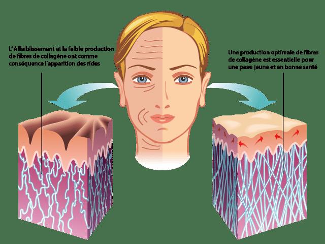 collagene peau